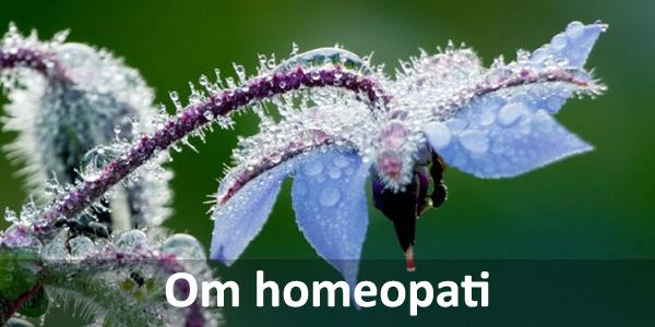 Borago blomma homeoapti